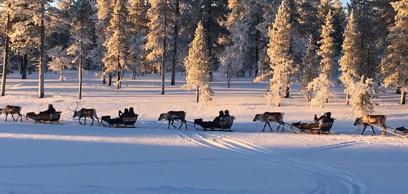 finland_lapland_saariselka_reindeer-safari.jpg